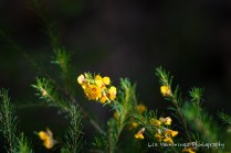 Wilddflower